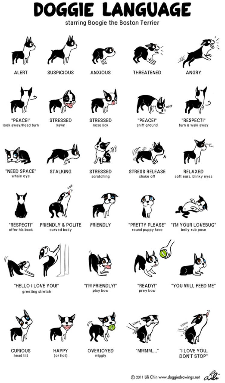 doggie-language-poster11