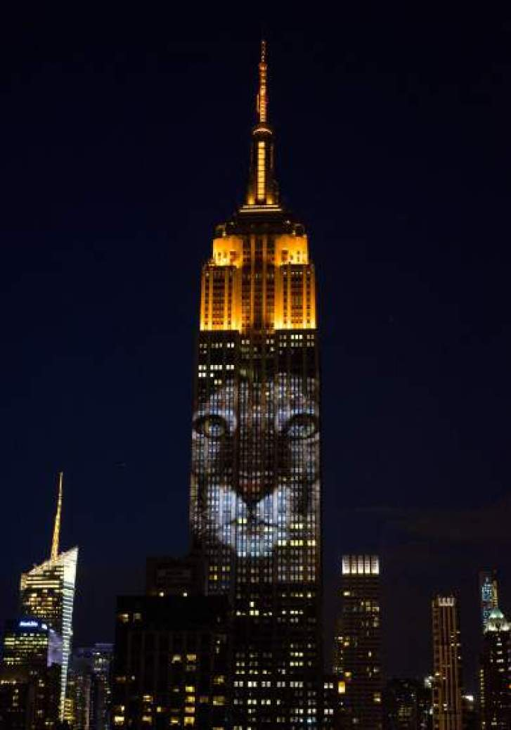 """Large images of endangered species are projected on the south facade of The Empire State Building, Saturday, Aug. 1, 2015, in New York. The large scale projections are in part inspired by and produced by the filmmakers of an upcoming documentary called """"Racing Extinction.""""  (AP Photo/Craig Ruttle)"""