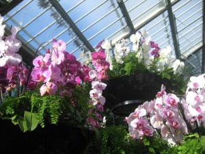 Phalaenopsis Orchid_a-curious-gardener-purple_white_collection