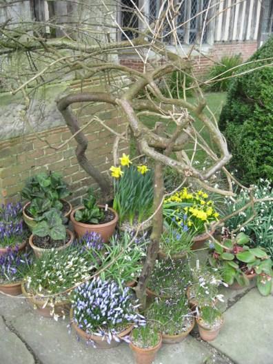 a-curious-gardener-great-dixter-IMG_0131a-curious-gardener-great-dixter