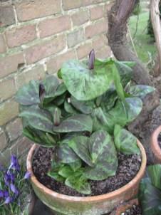 a-curious-gardener-great-dixter-IMG_0132