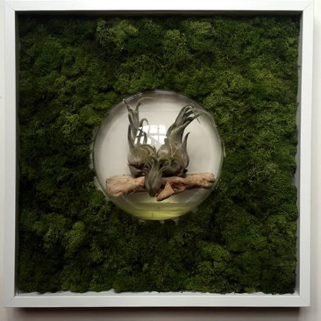 bubble-wall-living-decoration-terrerium-plants-moss-living-wall-office-houseplants-curious-gardener1