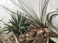 terrariums-london-greenwall-plant-home-houseplants-curious-gardener-close-993