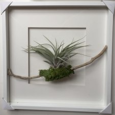 terrariums-london-greenwall-plant-office-houseplants-curious-gardener-close-1