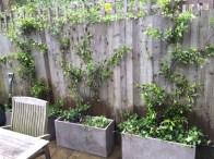 A Garden in Islington #1