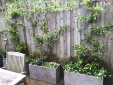 Crouch End Gardening and maintenance