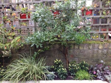 islington gardening services (2)