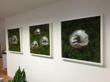 office plants in london - ost (12)