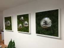 office plants in london - ost (12)