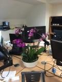 office plants in london - ost (6)
