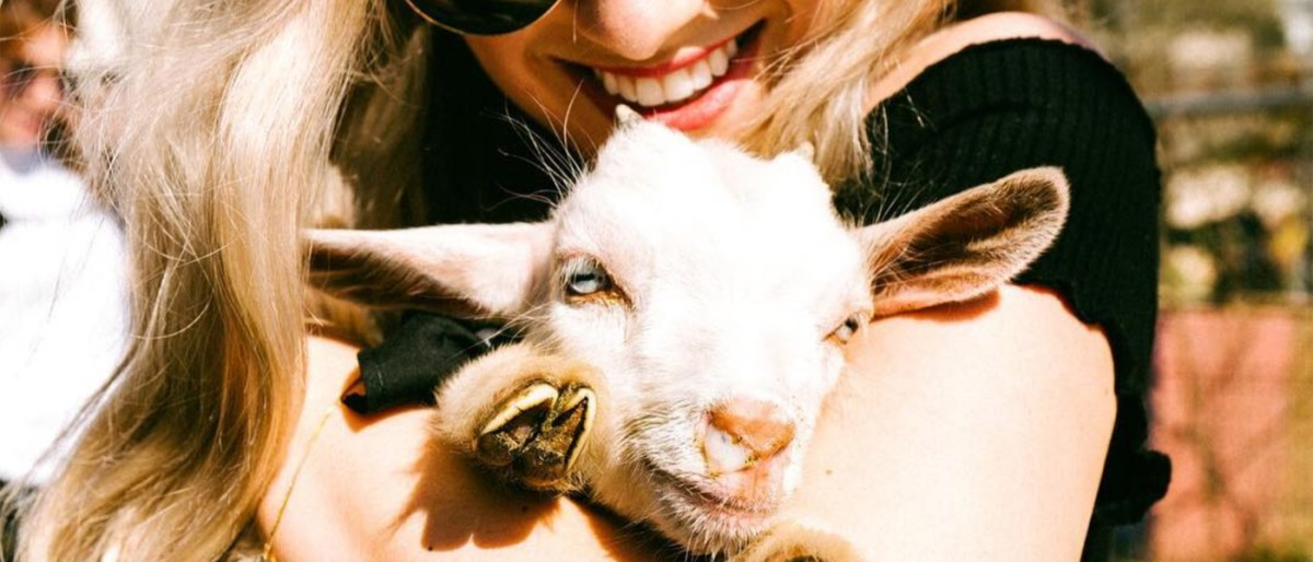 Viceland's baby goats at SXSW