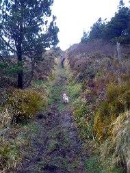 March 2013 - Devil's Bit Mountain - Wait for me!