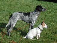 Bertha & Dolly - Tramore 2006