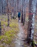 Knockbarron Woods