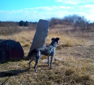 April 2013 - Lough Boora Parklands - Dolly = Mesolithic dog?