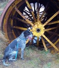 April 2013 - Lough Boora Parklands - Wheely good dog!
