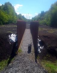 Track through the bog