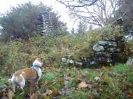 Monty staring intently!