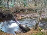Natural river dam