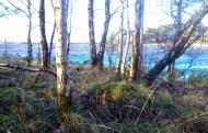 Fowlers Island, Lough Derg Choppy waters!