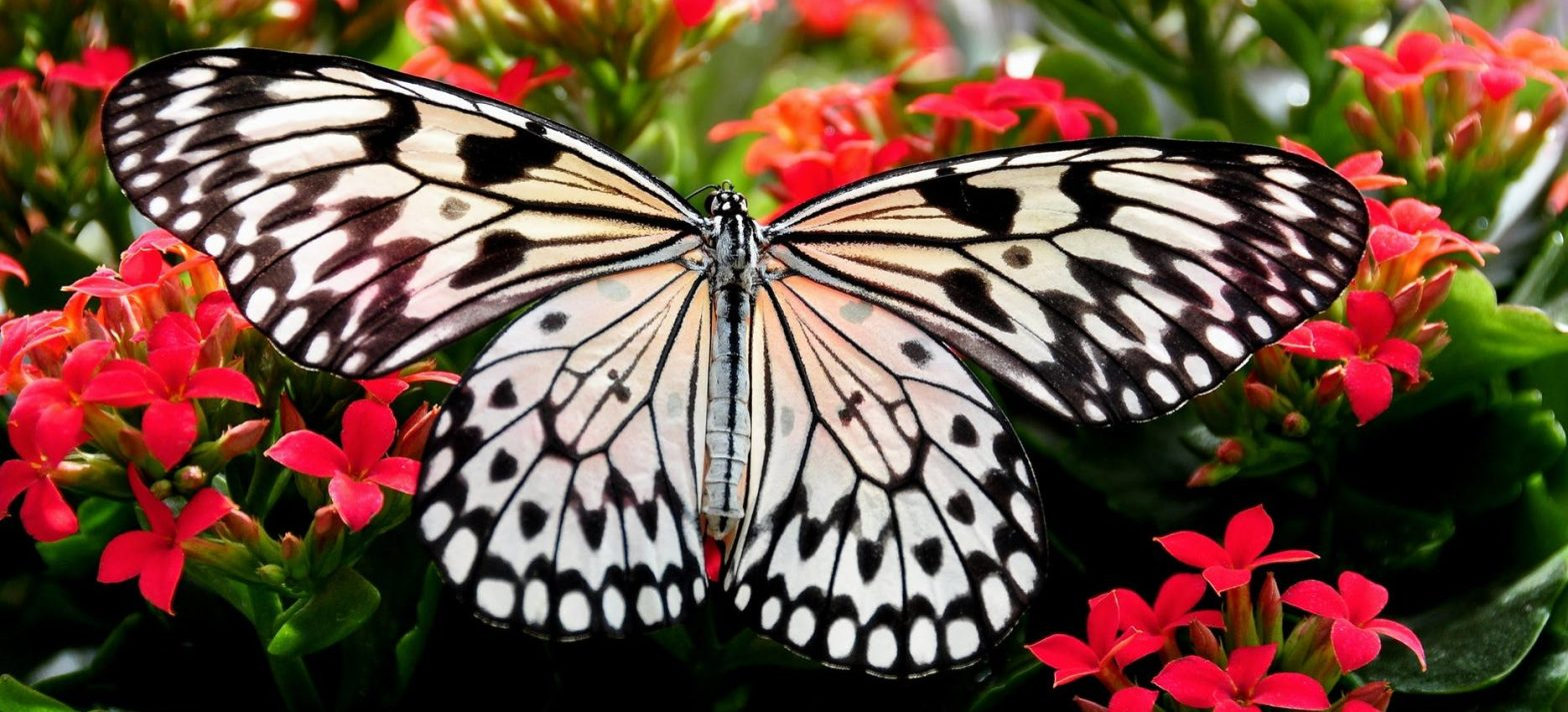 A butterfly is a great metaphor for how transforming your CX can take time to become something beautiful.