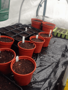 Other random sowings in a heated propagator tunnel.