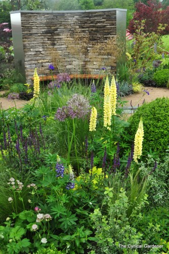 Wonderful Lupins standing up to the winds.