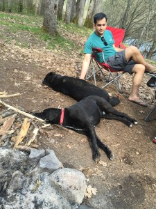 Tired dogs on a sunny car camping trip