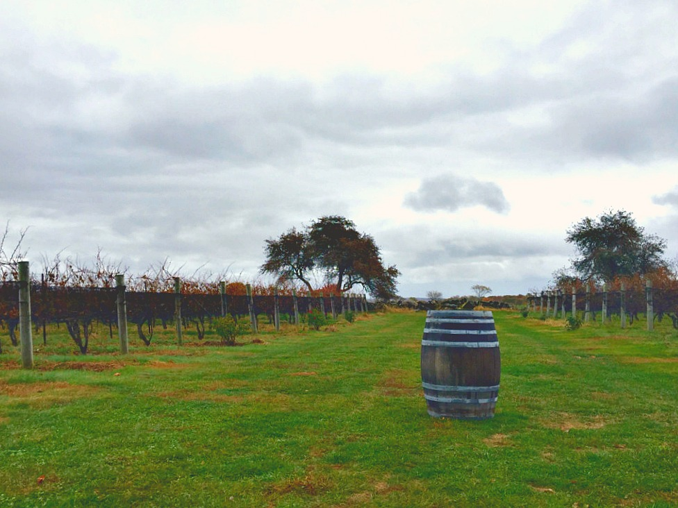 Best Time To Visit Long Island Vineyards