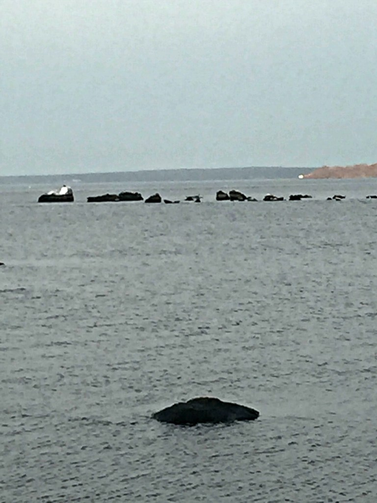 The seals at Rome Point!