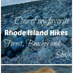 A Favorite New England Hike: Beach, Forest and Seals in North Kingstown, RI
