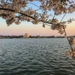 Where to See Cherry Trees in Spring Around the World