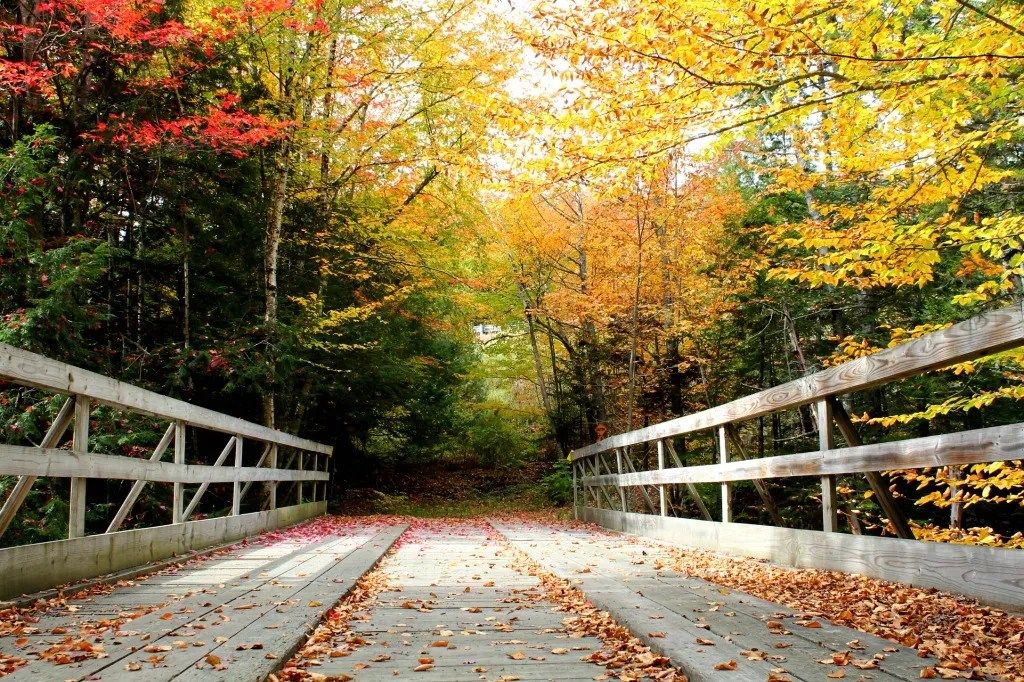 Day trips in New England in fall.
