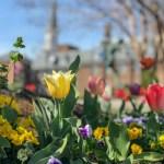 3 Fabulous Day Trips From Washington DC You Can Take Using Public Transportation