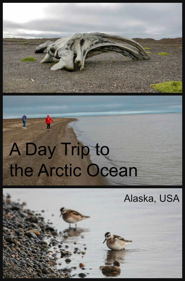 Read on to see how easy it is to learn about the native Inupiat culture, put your feet in the Arctic Ocean and perhaps see a polar bear as a day trip while you are visiting Alaska. #Arctic #thingstodoinAlaska #USAtravel #TBIN