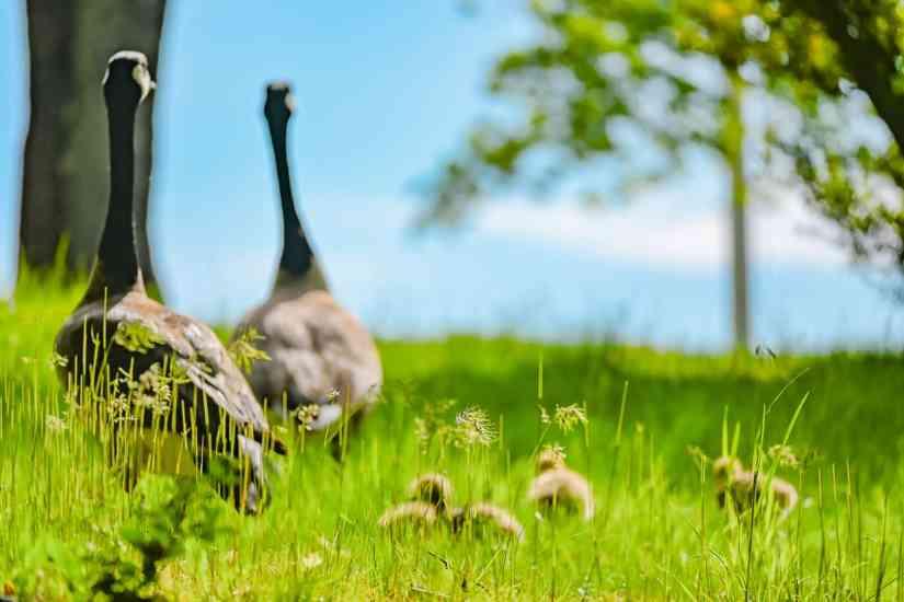 Common birds in RI