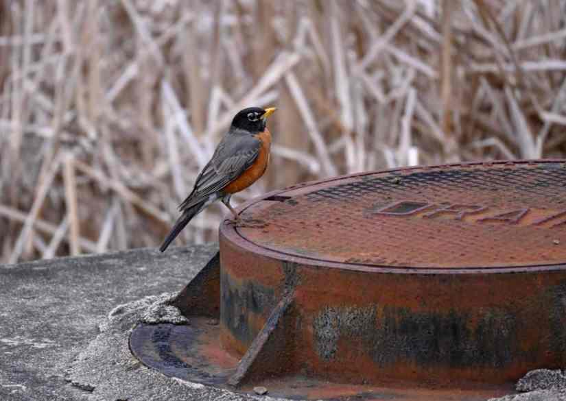 easy birds to find in Rhode Island
