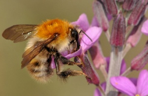 Bees' Needs Week is back for the third year running from 9 – 15 July