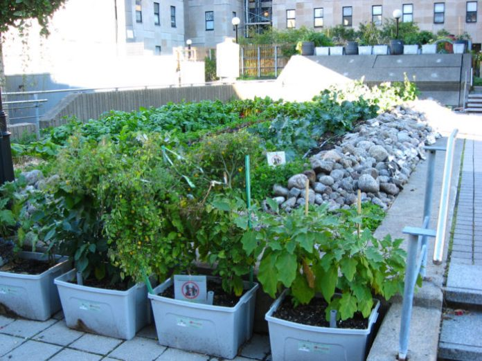 Why roof-top gardening matters