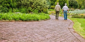 5 Common Elderly Health Issues
