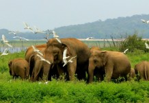 Wild Guides: Sri Lanka's local wildlife entices travellers to visit in new first-of-its-kind film