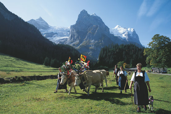 Why You Need To See the Alpine Cow Descent in Switzerland At Least Once in Your Life?