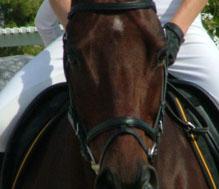 horsecloseup
