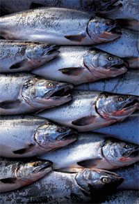 fishgroup