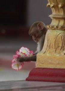 monkeya