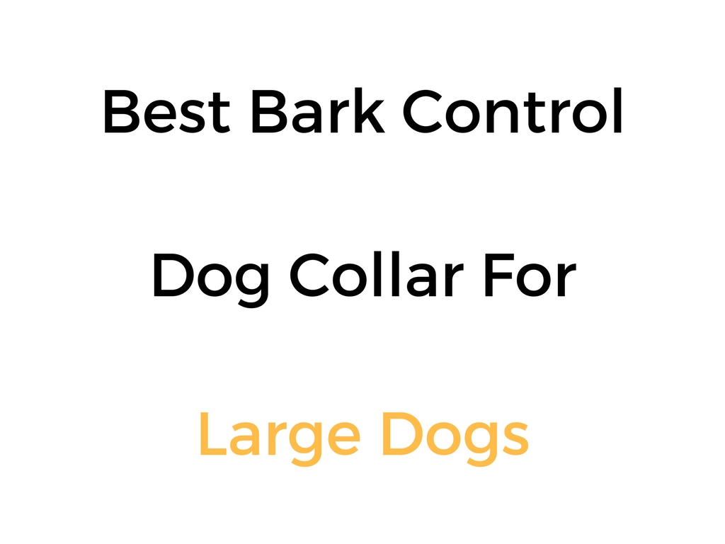 Best Bark Control Amp No Bark Dog Collars For Medium To