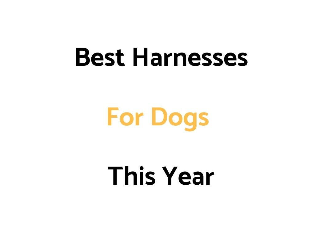 Best Dog Harnesses In