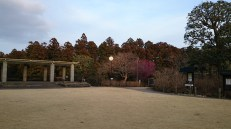 A spacious lawn with benches and also tables for picnic. You can see the awakening of spring on the Ume tree in the background.