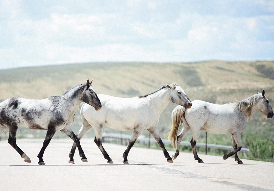 wild horses in superior, wyoming