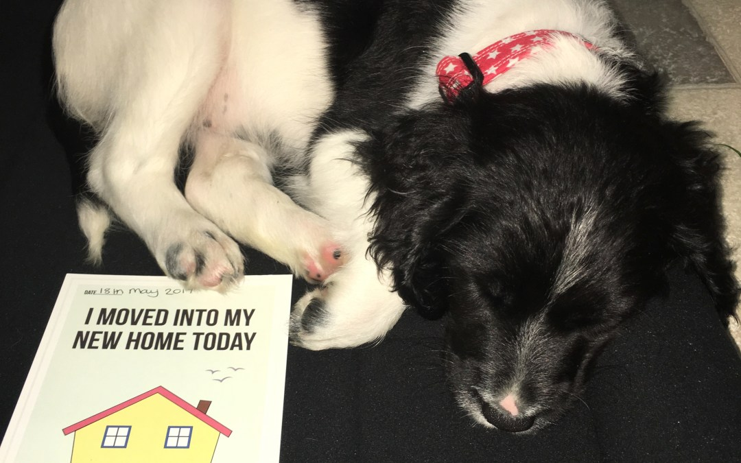 The day I came home